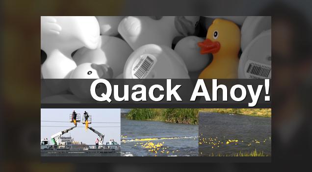 Quack Ahoy!